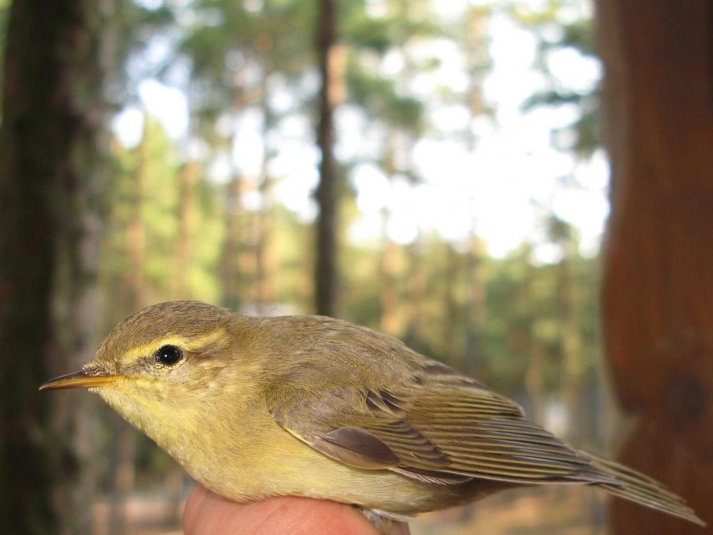 Хищные птицы калининградской области
